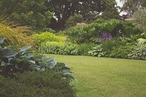 backyard green lawn